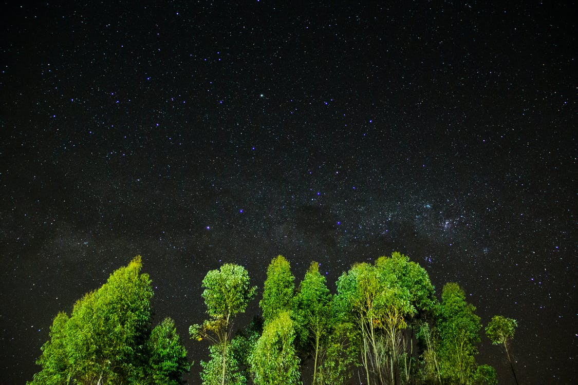 Green Leafy Trees during Milkway