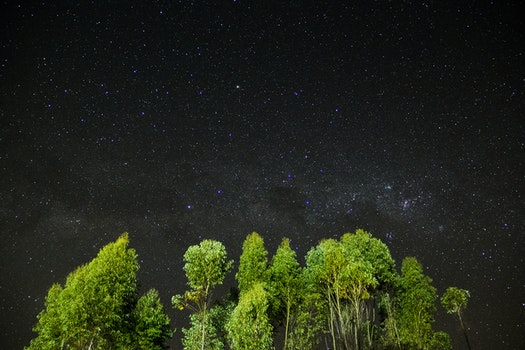Free stock photo of night, trees, stars, árvores
