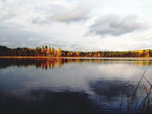 Images libres de droits de arbres, automne, bois, calme