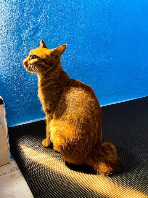 Free stock photo of blue, cat, light