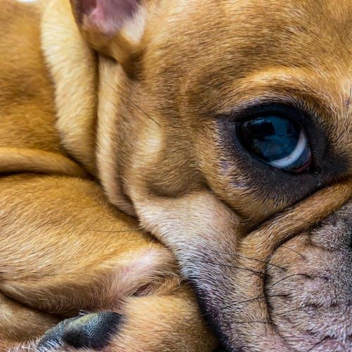 Free stock photo of a dogs life, animal, animal pet