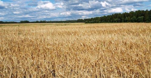 Photos gratuites de agriculture, campagne, ciel, clairière