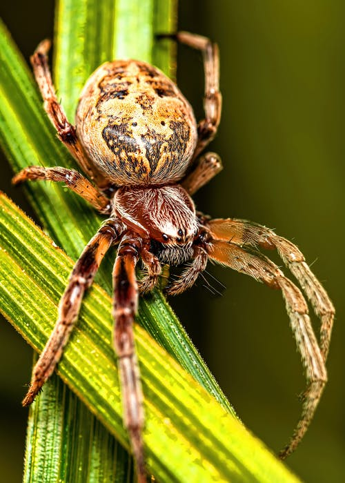 Brown and Black Spider on Green Leaf