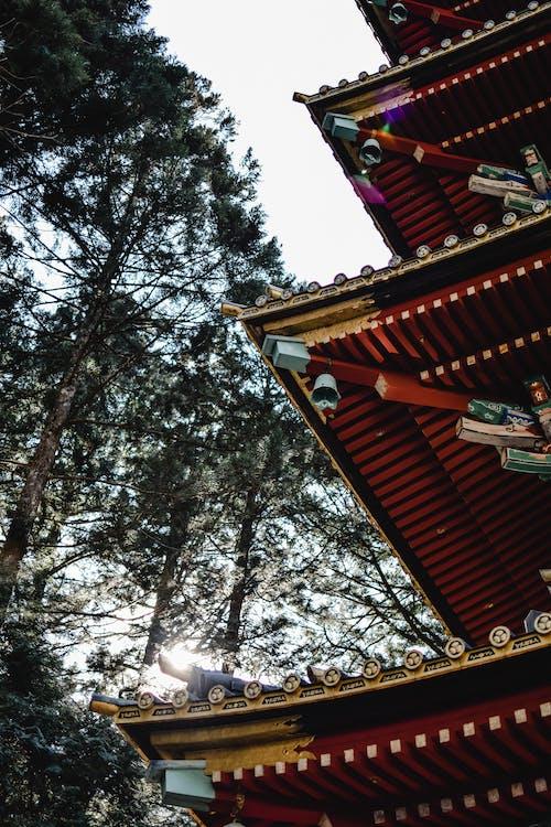 Foto d'estoc gratuïta de a l'aire lliure, arbres alts, arquitectura