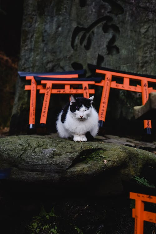 White and Black Cat on Brown Rock