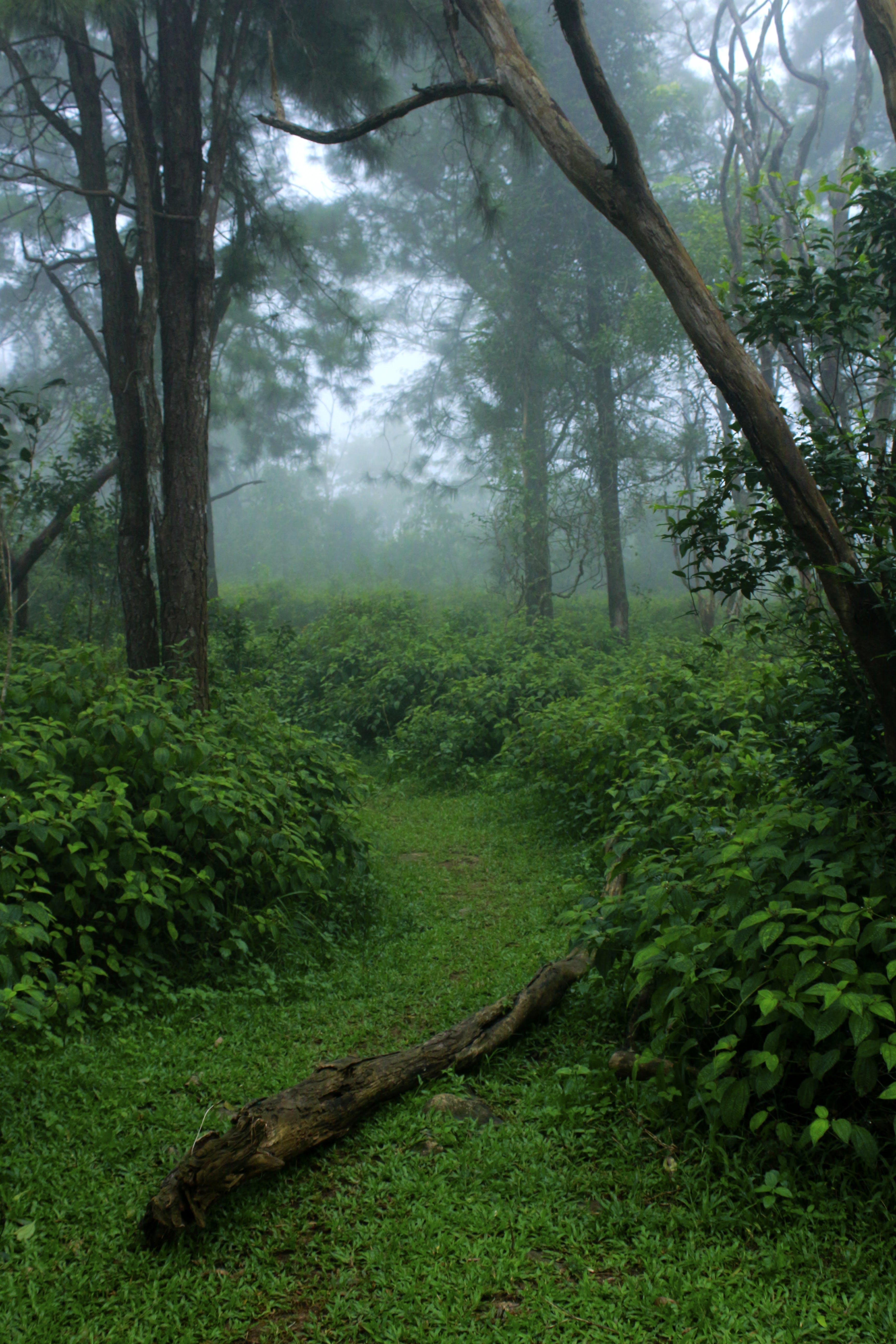 Free stock photo of adventure, amazing, bright, environment