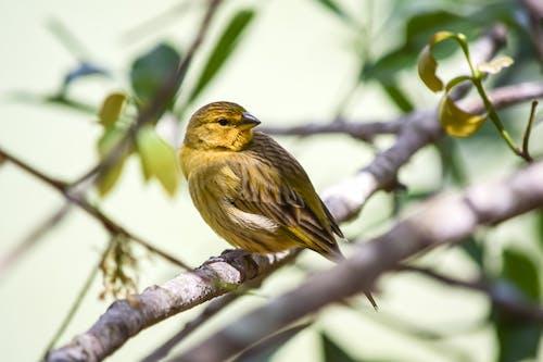Small bird sitting on branch