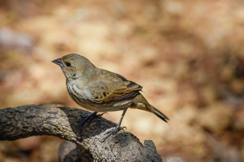 Bird on tree branch in forest