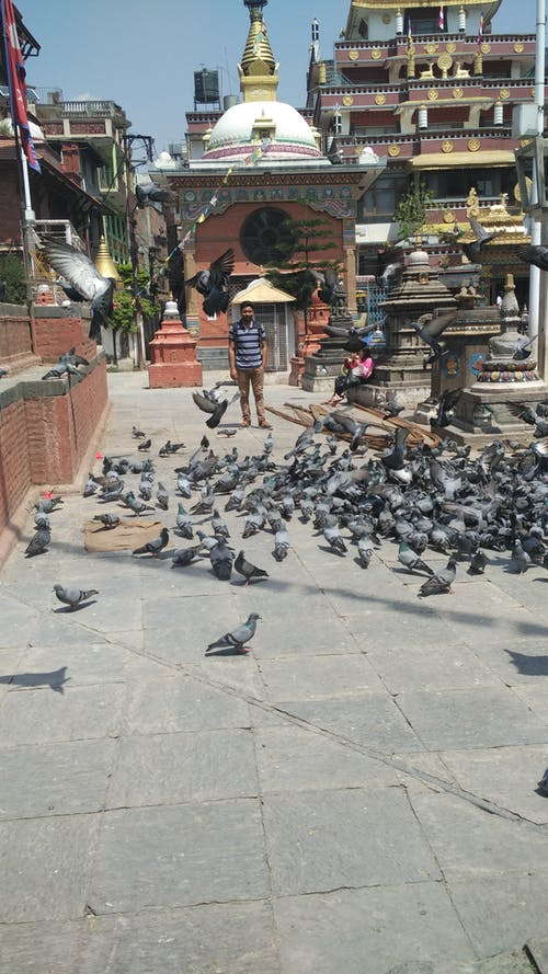 Free stock photo of surrounded with pigeons