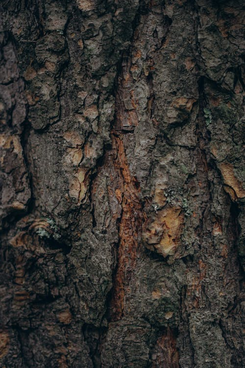 Abstract background of aged rough bark of old pine tree with dark surface