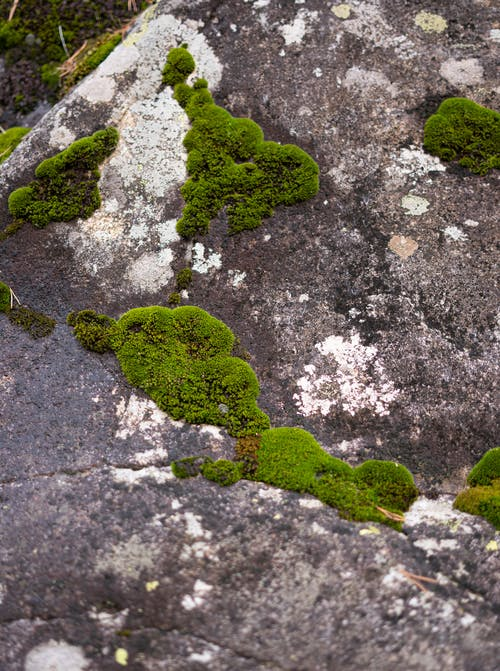 Green moss growing on stone
