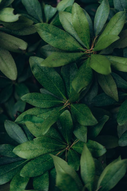 Green leaves of exotic plant