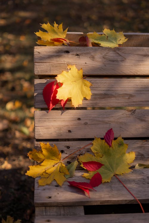 Wooden bench with fallen leaves