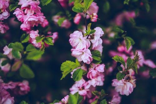 Fotobanka sbezplatnými fotkami na tému kvety, purpurové kvety, rastlina