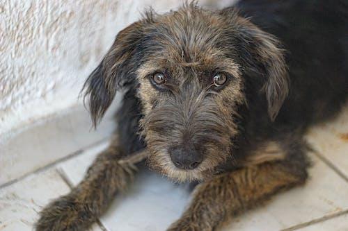 Foto profissional grátis de animal fofo, bonitinho, cachorro, cão