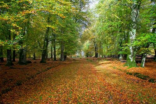 Imagine de stoc gratuită din Anglia, anotimp, arbori