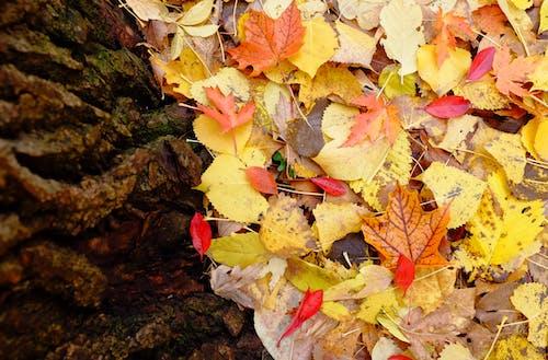 Free stock photo of abstract, fall, tree