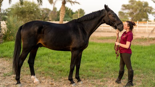 Side view of happy young female equestrian in casual clothes and boots kissing muzzle of adorable purebred dark bay horse standing on grassy meadow in countryside