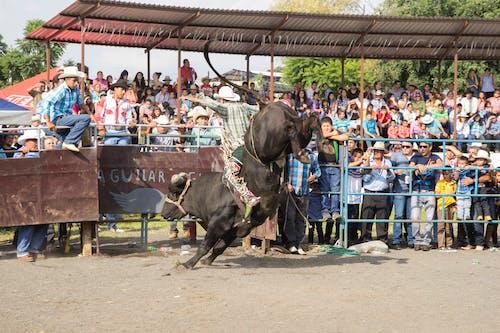 People Standing Beside Black Horse