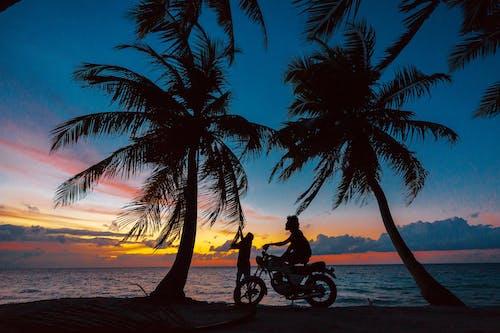 Fotobanka sbezplatnými fotkami na tému cestovať, dlaň, exotický
