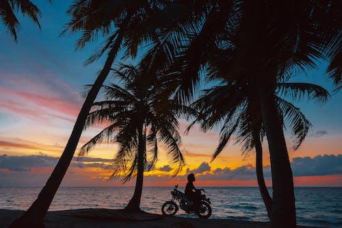 Fotobanka sbezplatnými fotkami na tému exteriéry, kokosové palmy, krajina pri mori