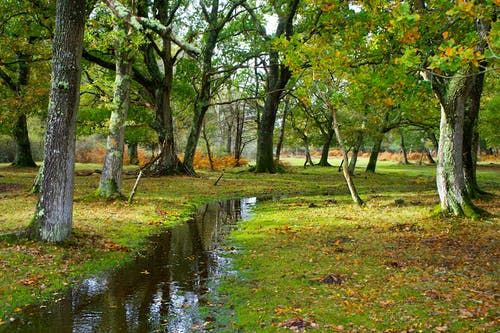 Green Grass and Trees Beside Stream