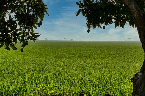 Green field under cloudy blue sky in countryside