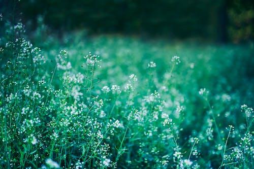 Photos gratuites de champ, fleurs