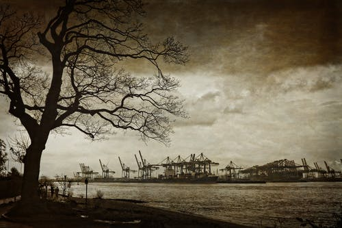 Photography of Power Plant Island Across Bare Tree