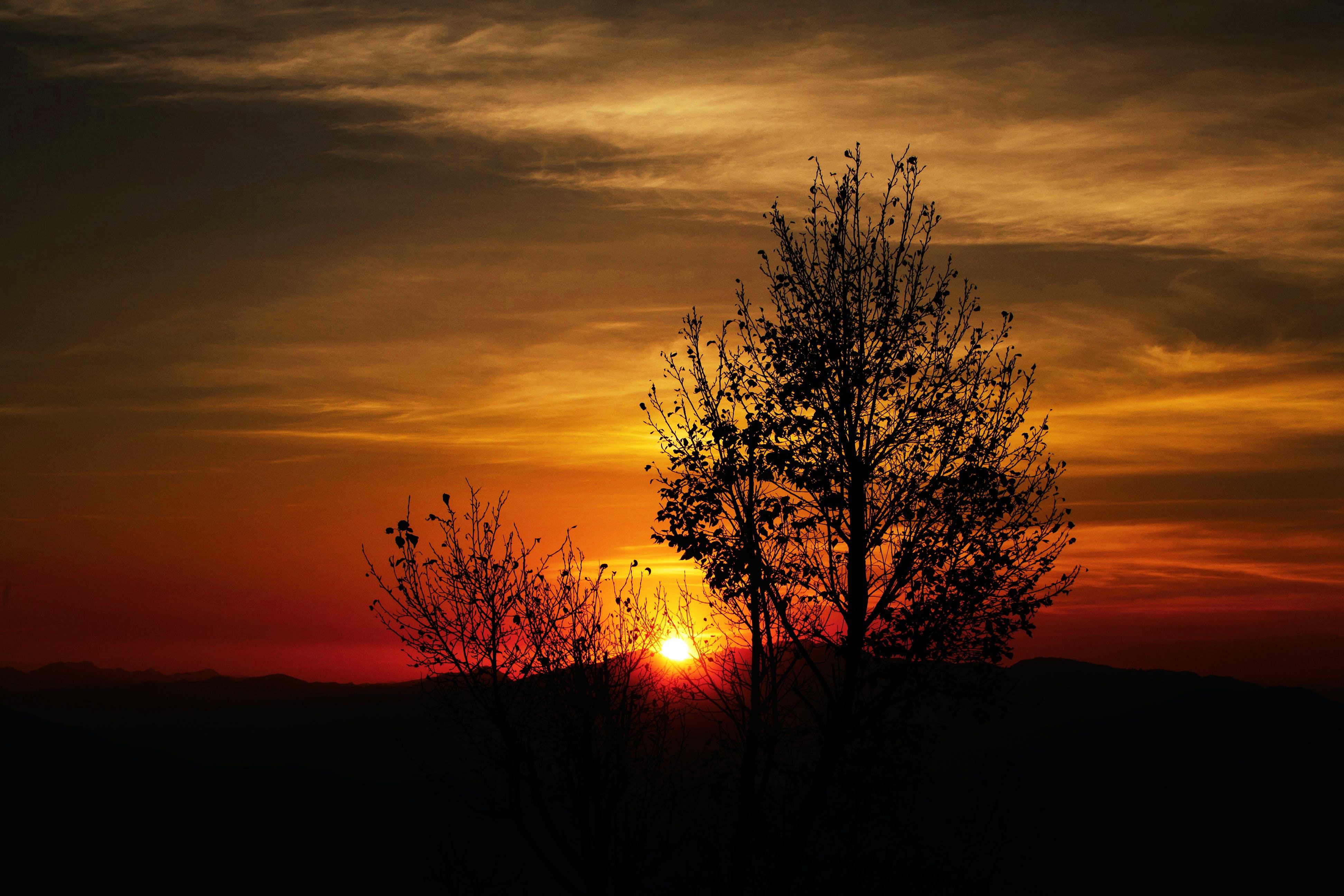Ingyenes stockfotó ég, fa, fény, festői témában
