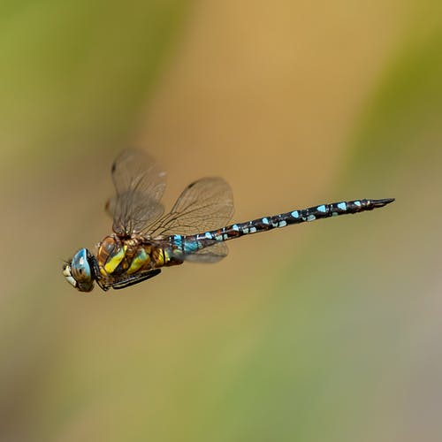 Close-Up View of Blue and Black Damselfly