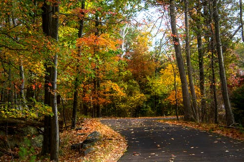 Free stock photo of autumn, colors of autumn, fall color