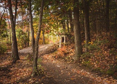 Ingyenes stockfotó ág, Arany, az ősz színei témában