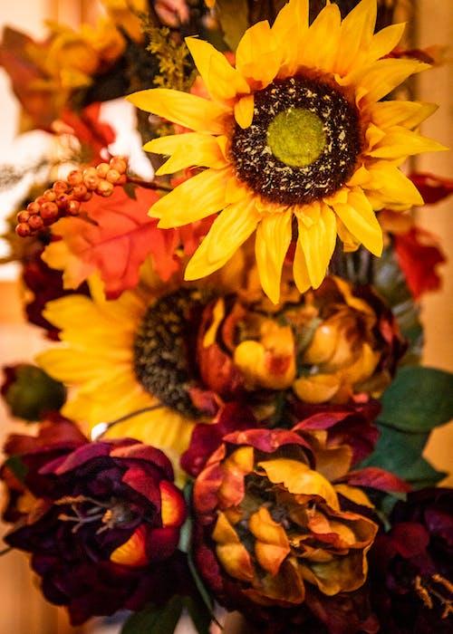 Close Up Shot of Sunflower