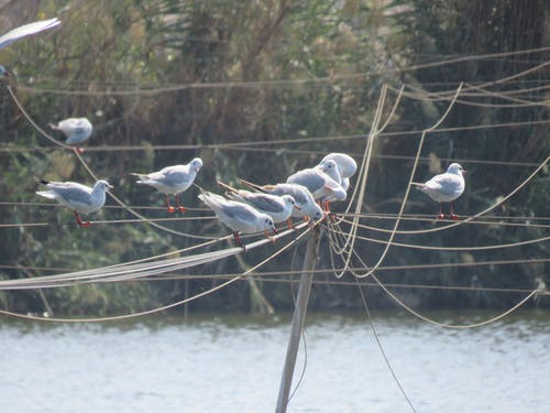 Ingyenes stockfotó madár témában