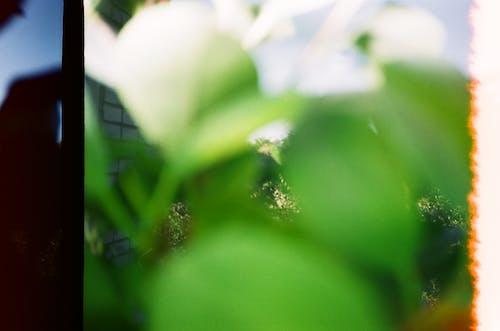 Photos gratuites de 35mm, araignée, art abstrait, brouiller