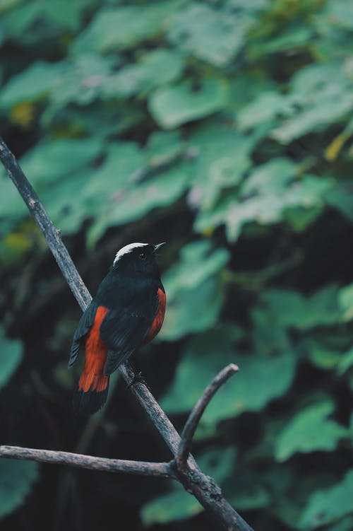 Black and Orange Bird on Tree Branch