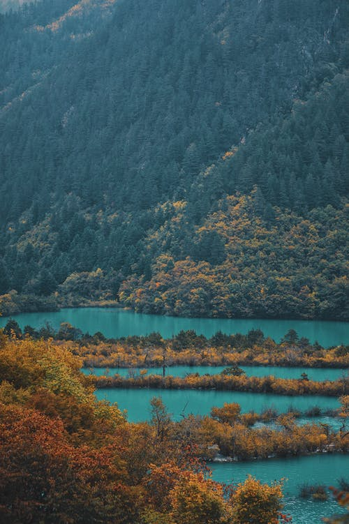 Green and Brown Trees Near Body of Water