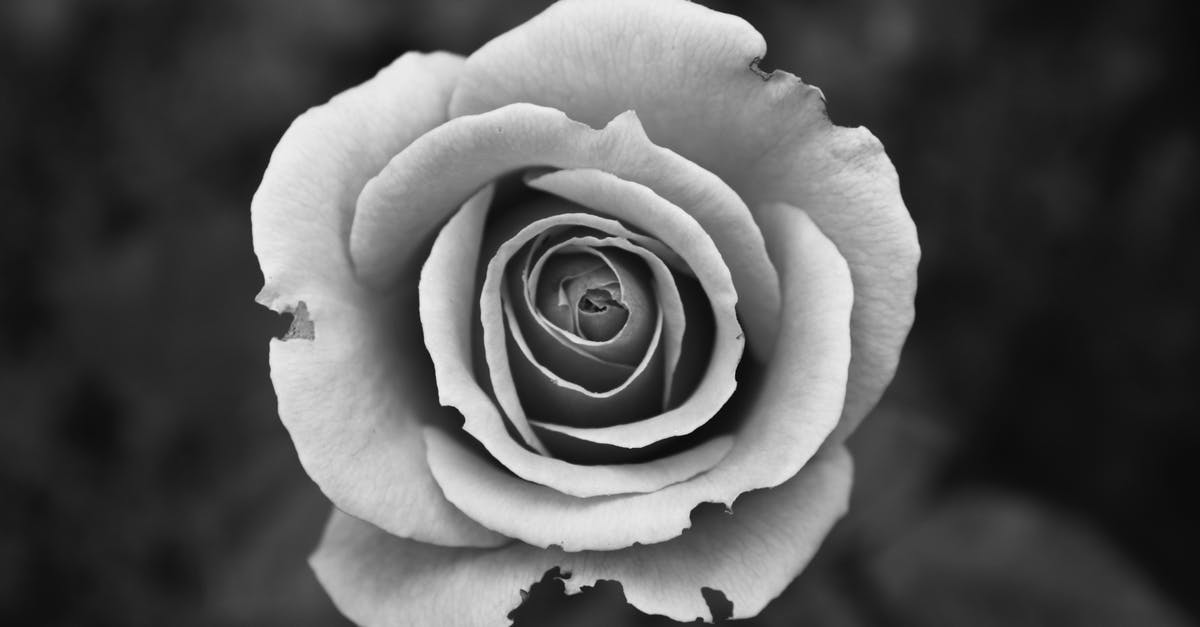 Free stock photo of black and white bloom blossom