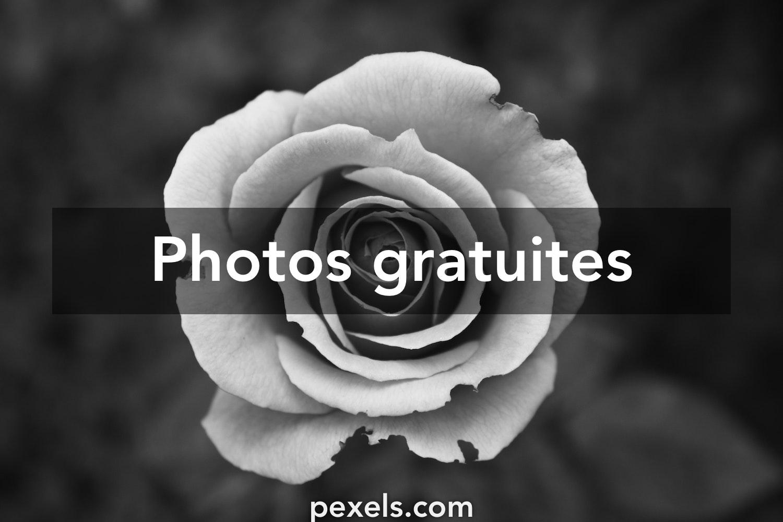 Photos Gratuites En Noir Et Blanc Pexels Photos Gratuites
