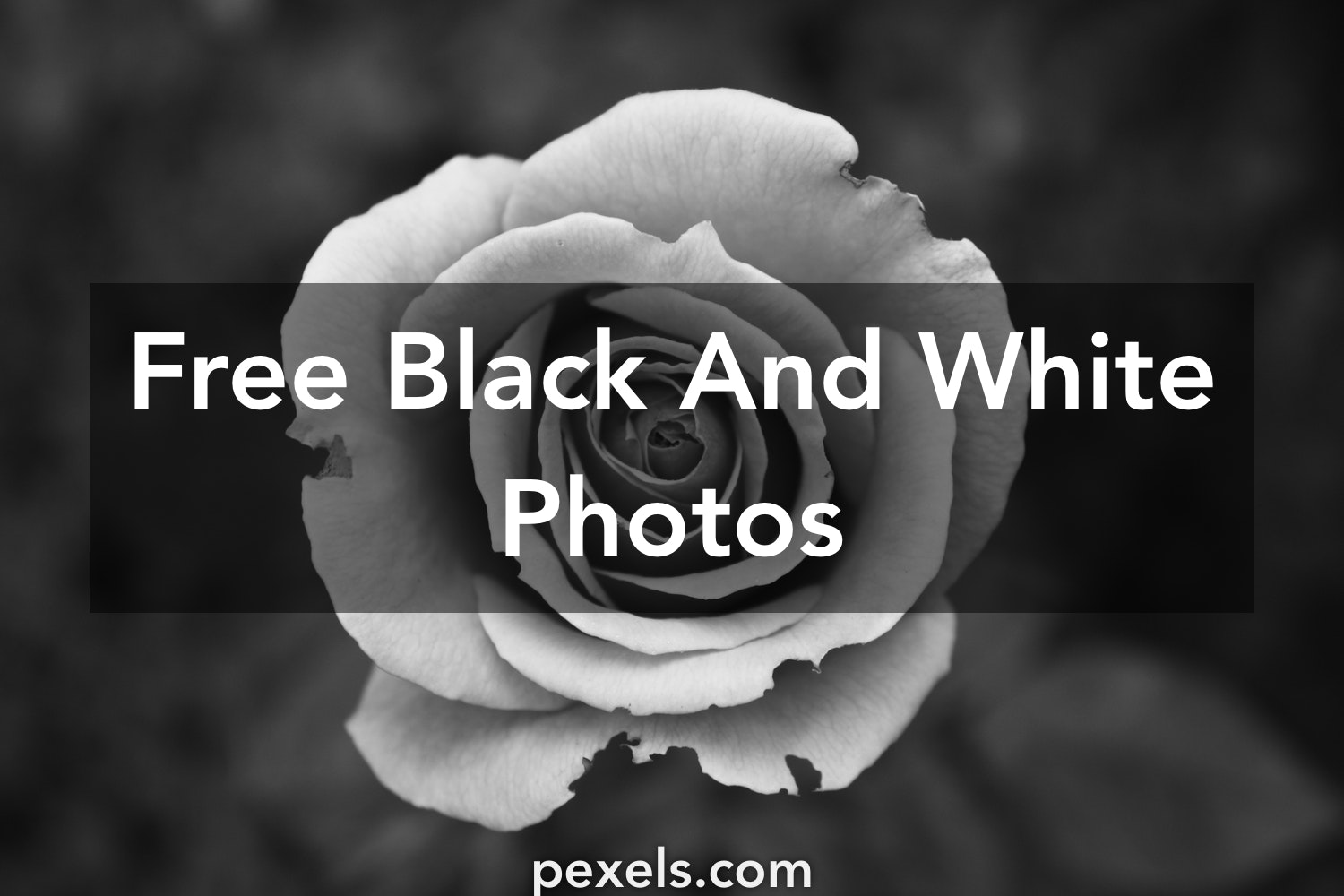 Free black and white photography · pexels · free stock photos