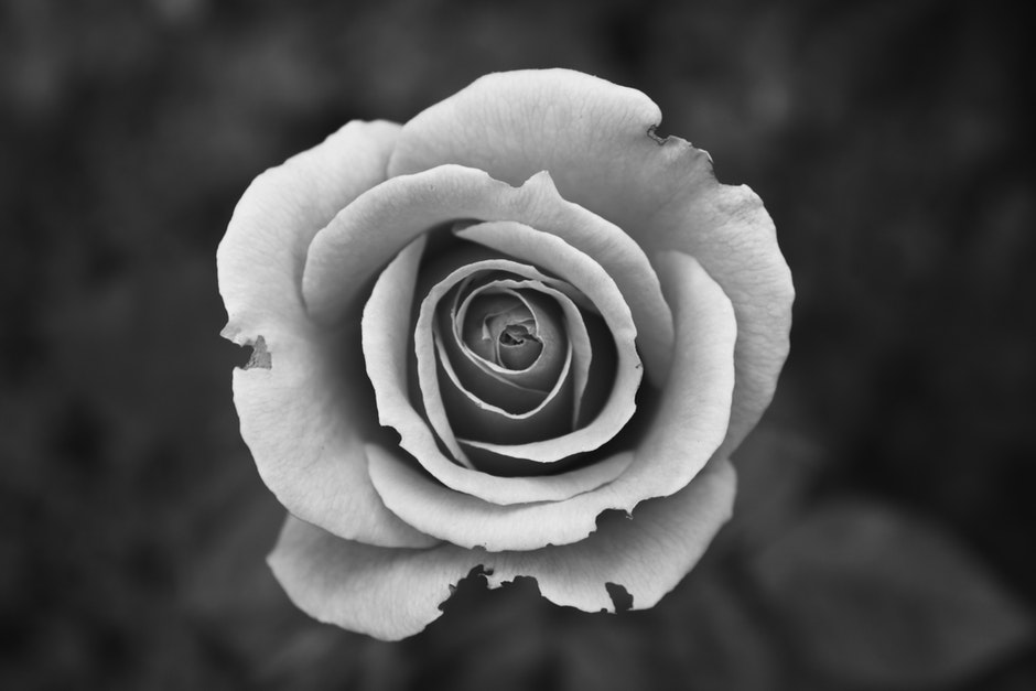black-and-white, bloom, blossom