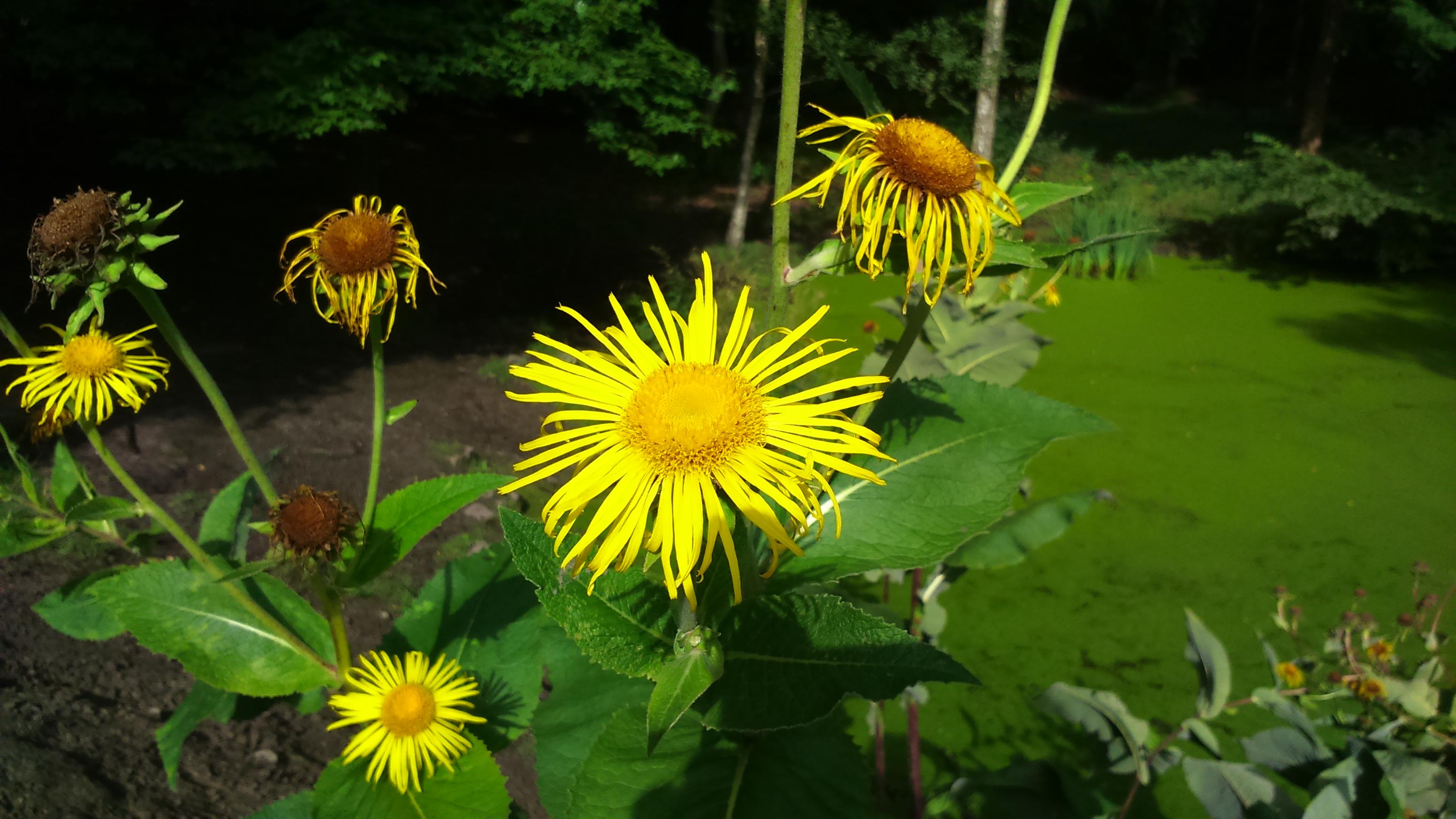 Foto Stok Gratis Tentang Bunga Matahari Penuh Warna Warna Warni