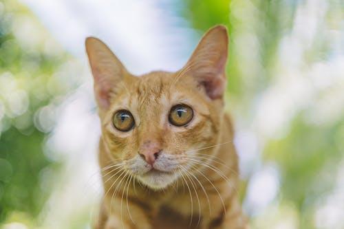 Fotos de stock gratuitas de adorable, bigotes, gato, joven