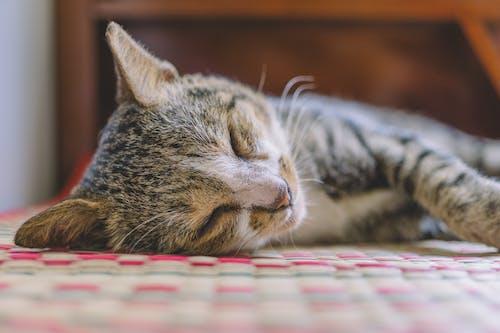 Бесплатное стоковое фото с домашний, животное, котенок, кошачьи