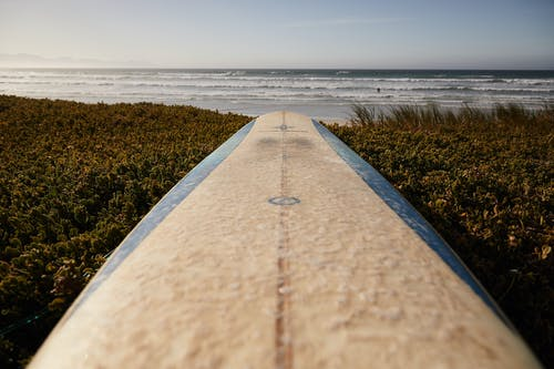 Perspective view of white surfboard with blue edges placed on grassy coast against rippling sea and blue sky on seaside