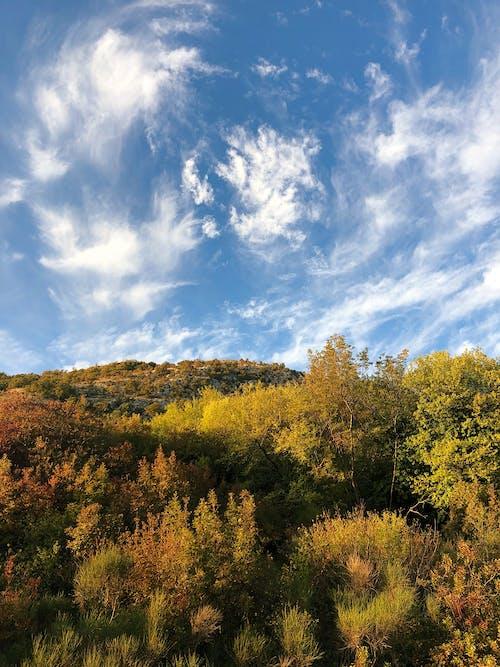 Immagine gratuita di alberi autunnali, autunno, autunno accogliente
