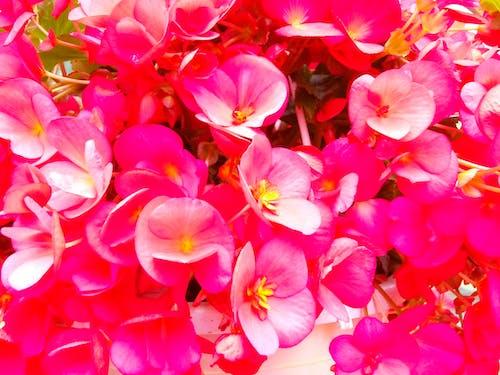 修剪花草, 天性, 微妙, 植物群 的 免費圖庫相片