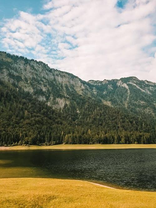Kostenloses Stock Foto zu bäume, berg, fluss
