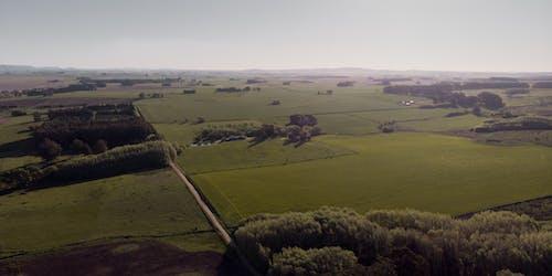 Green Grass Field Under White Sky